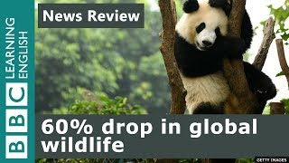 60% drop in global wildlife: News Review