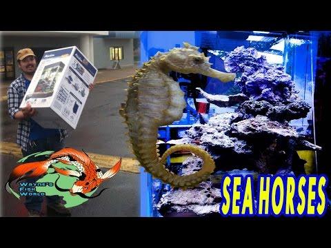 Setting Up 15 Gallon Nano Seahorse Biotope