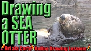Drawing Sea otters