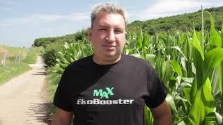Ogled na kukuruzu sa EkoBooster 2 + EkoBooster MAX
