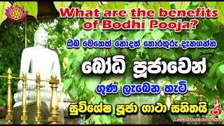 බෝධි පූජාවෙන් ගුණ ලැබෙන හැටි  What are the benefits of Bodhi Pooja ?