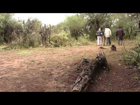Proyecto Gran Chaco Americano (Argentina)