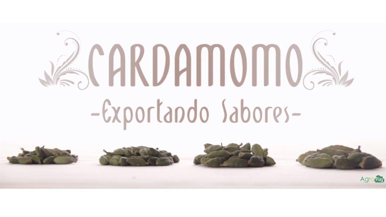 Conceptos Básicos Sobre El Cultivo De Cardamomo Tvagro Por Juan Gonzalo Angel