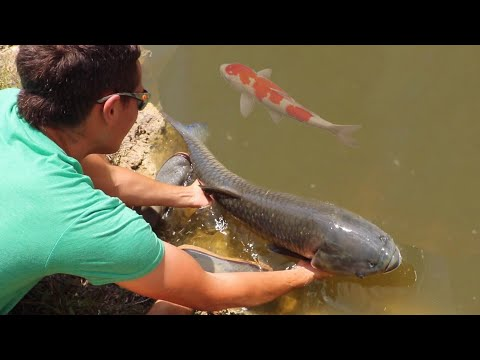 Catching MASSIVE CANAL WHALES in HIDDEN Koi pond!!