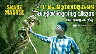 Wow ! Vava Suresh releases 11 pythons into the wild |  Snakemaster |  Latest episode