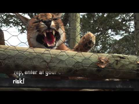 Moholoholo Rehab Centre | Many Faces Of A Feisty Lynx In Sou
