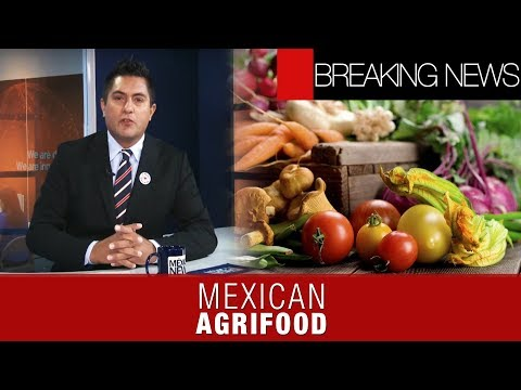 Mexican agrifood sector rallies on | Breaking News