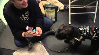 Using Apps For Dog Training, Nyc