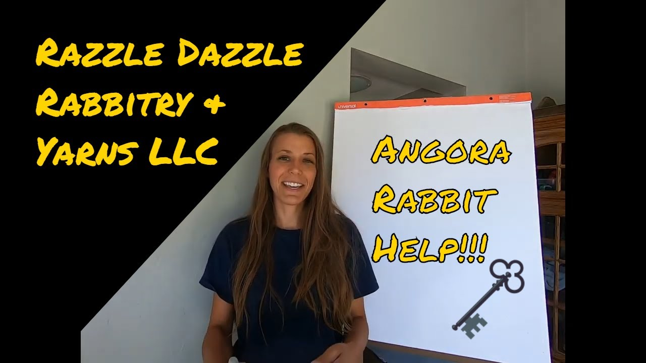 Angora rabbit help!