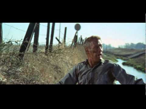 Cool Hand Luke is listed (or ranked) 47 on the list The Best Movies Based on Books