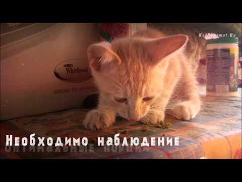 Как правильно кормить месячного котенка
