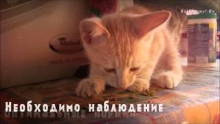 Чем кормить месячного котенка