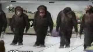 Halay Ceken Maymunlar izleeee