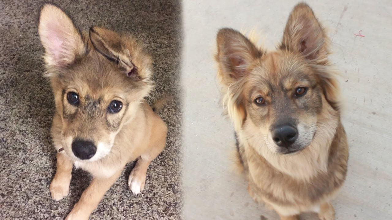 My Dog\u0026#39;s Breed Reveal (DNA Test) - YouTube