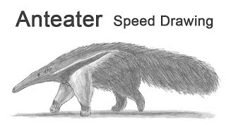 Giant Anteater Time-lapse (Speed) Drawing