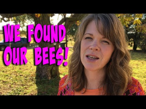 We Found Our Bees!