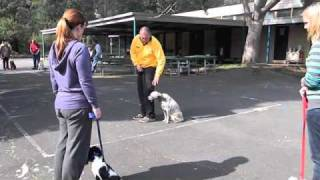 The Alpha Canine Group Presents Alpha Dog Training