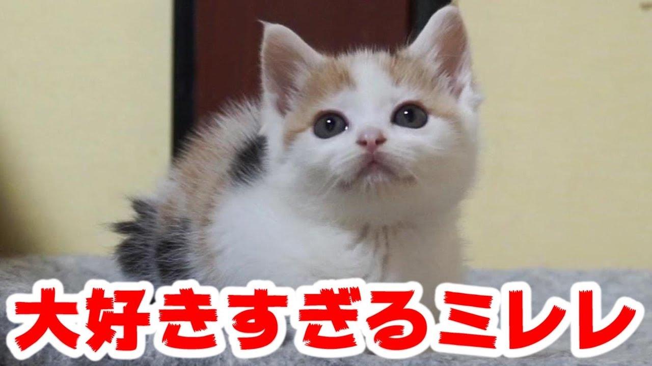 猫 子猫 毛 三
