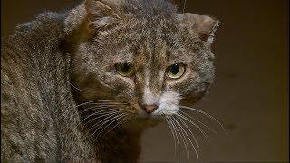 В Бийске соседи поссорились из-за кошек, живущих в подвале дома (16.02.18г., Бийское телевидение)