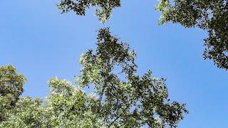 صوت الطبيعة الهادئة..تغريد العصافير و خرير المياه 🦜💙