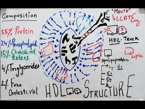 High Density Lipoprotein - HDL Structure