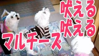 This animation is a past thing, and four dogs have already died マ...