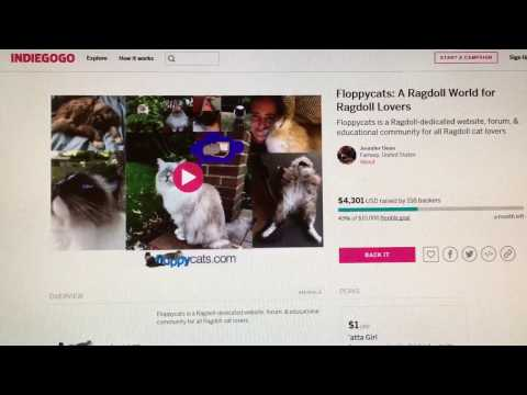 Help Floppycats Grow! Floppycats Ragdoll Cat Blog Indiegogo Campaign