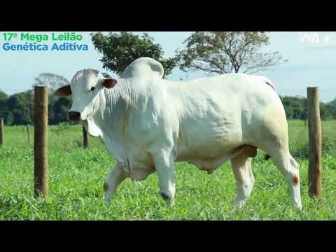 LOTE 01 - REMC A1901 - 17º Mega Leilão Genética Aditiva 2020