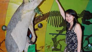 BIGGEST Beasts from the Ice Age