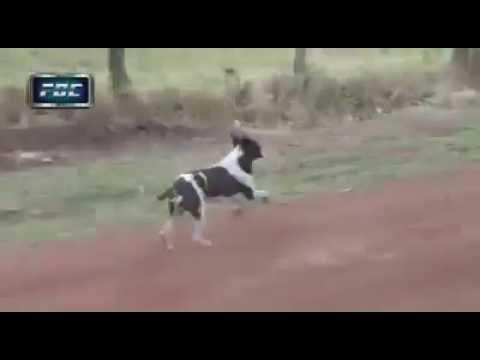 Perro se salva de ser atropellado en Rally