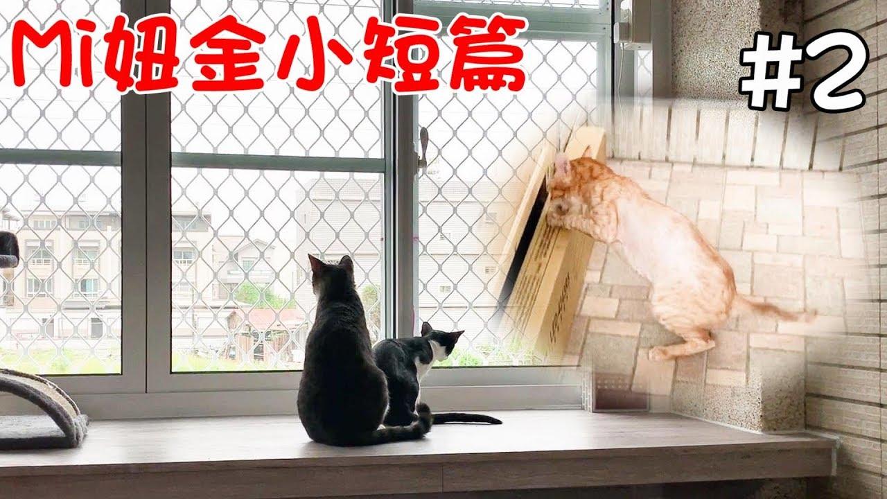 Mi妞金小短篇#2-新家的第二天!Mi醬跟黑妞登上望春風臺!阿金的蠻荒之力!! - YouTube
