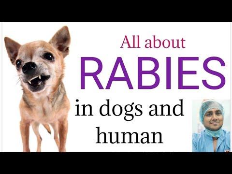 Rabies in Dog II Preventive Measures II Explained II dog and vet II Hindi