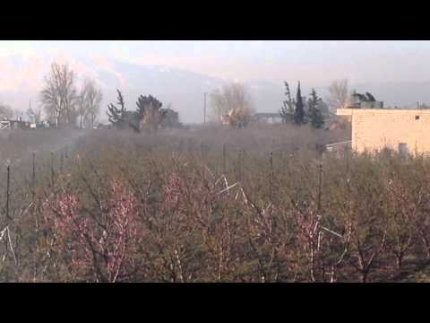 Anti frost wobbler sprinklers- Green planet orchards, Bekaa valley, Lebanon