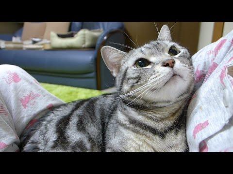 甘えん坊の熱視線 感情が思いっきり顔に出てしまう猫