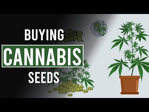 Where To Find Cannabis Seeds?
