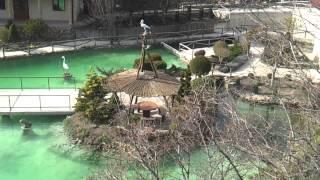 Свадьба Геленджик video-2013-03-02-16-18-23