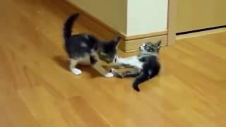 Котята шалуны