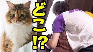猫失踪ドッキリを兄が仕掛けました。 チャンネル登録・高評価・Twitter...