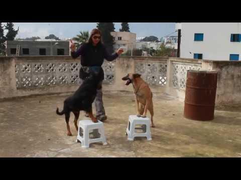 Test Chien - 15 techniques à savoir - Les bases de l'éducation canine - Blog chien