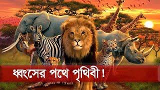 পঞ্চাশ বছরেই শেষ ৭০% বন্যপাণী | Wildlife | Somoy TV