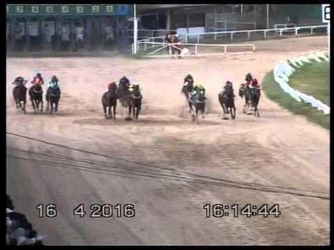 ม้าแข่งสนามโคราช 16 เมษายน 2559 รวมทุกเที่ยว