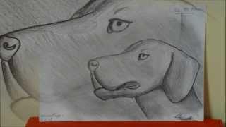 :daivhy Weimaraner Hund Bleistiftzeichnung