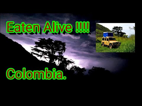 Eaten Alive - Colombia .Land Rover Defender 300tdi.