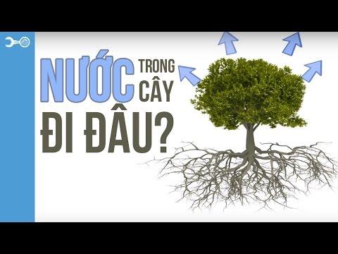 Thế giới thực vật: Nước trong cây đi đâu?