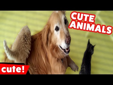 Funniest Cute Pet & Animal Bloopers & Moments Weekly Compilation November 2016 | Kyoot Animals