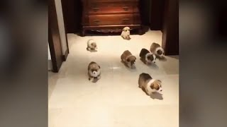 Adorable Cute Animals Compilation Puppies Dogs Funny Cute Puppy Videos
