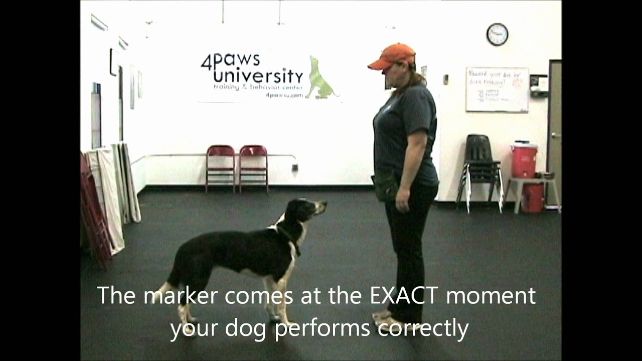Using Markers In Dog Training