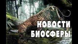Новости Биосферы. Экология. Человек и мир. выпуск 1