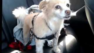 Harness Dog Car Safety Seat Belt System Sm/med 12-28 From Amazon.  Purchased $12.61