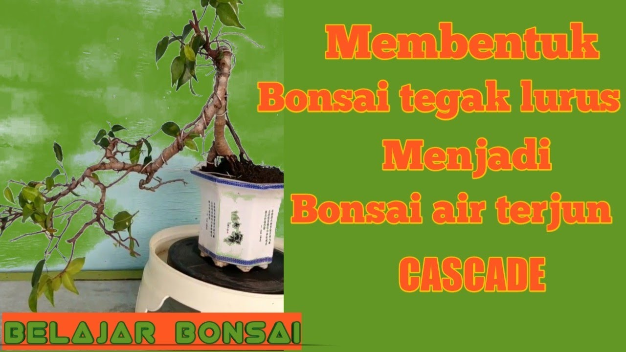 Cara Membentuk Bonsai Air Terjun Youtube